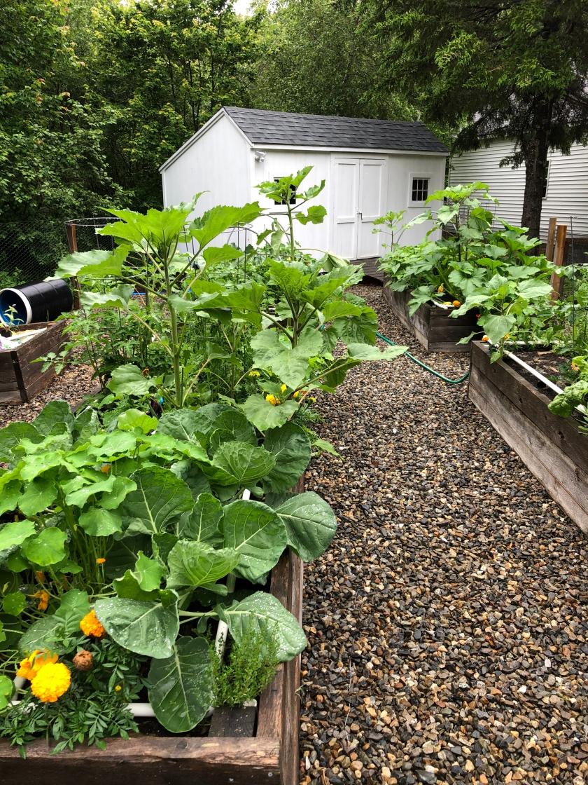 Veg garden 3