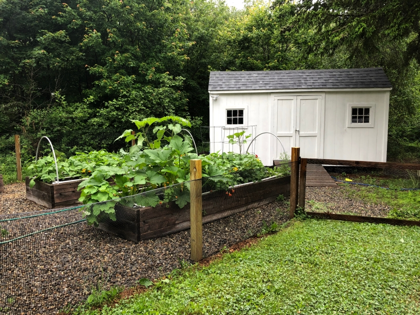 Veg Garden shed coop